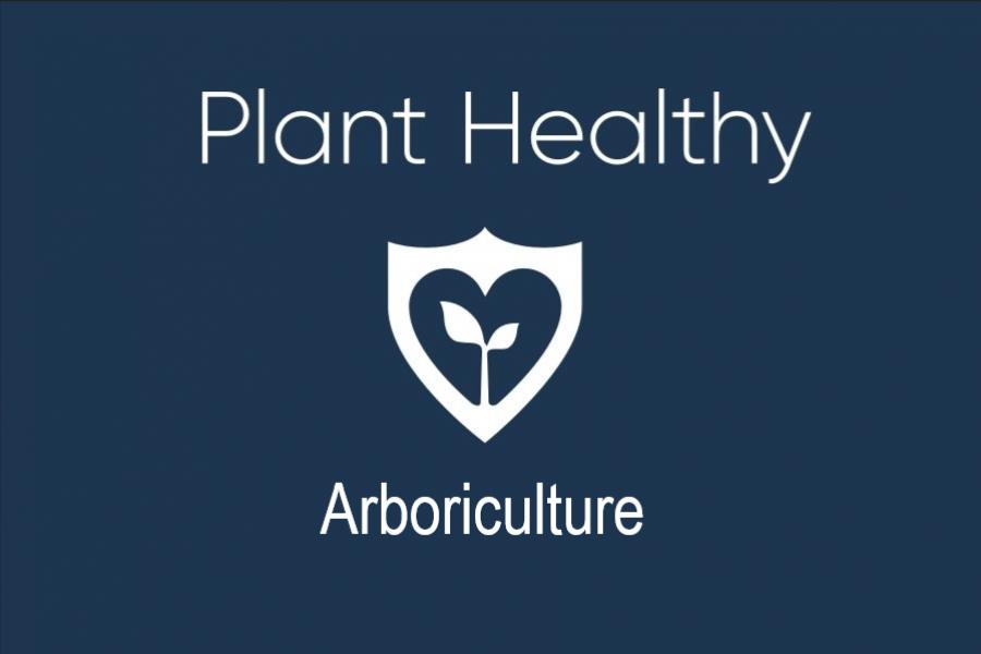 Plant-healthy-arboriculture