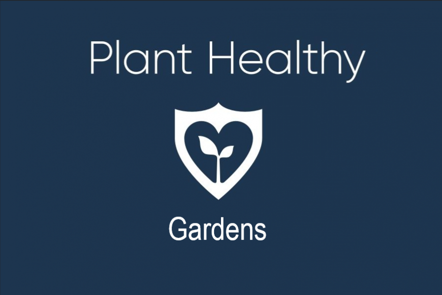 Plant-healthy-gardens