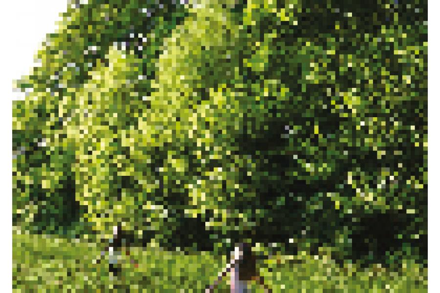 Thumbnail_tree-health-resilience-strategy.pdf